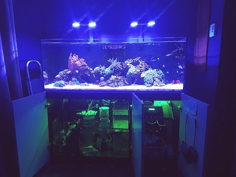 Red Sea Reefer 525 Xl Sump Update Youtube