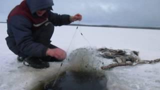 Проверка сетей Неплохой улов В середине зимы подняло лед