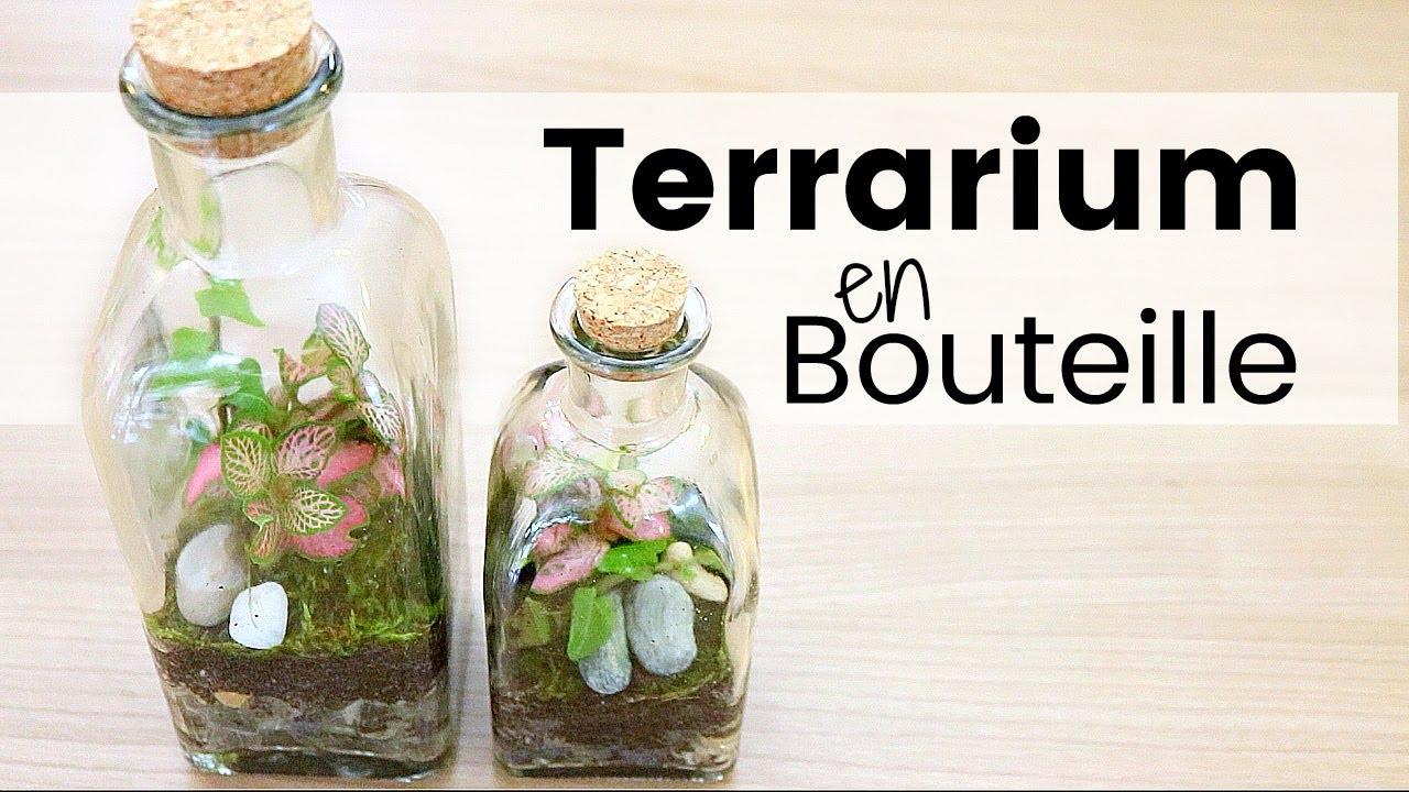 Terrarium Fermé Plante Grasse diy - comment créer un terrarium en bouteille | plantes en bocal