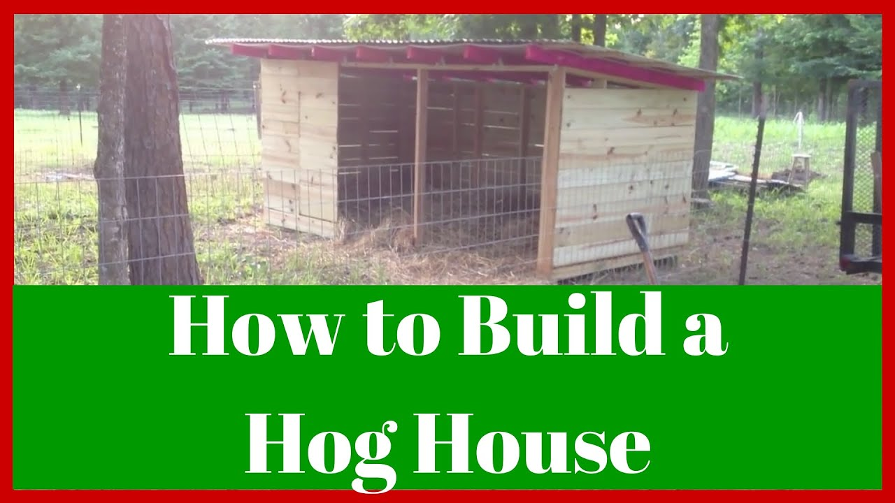 American guinea hogs agh how to build a hog house or for How to build a small home