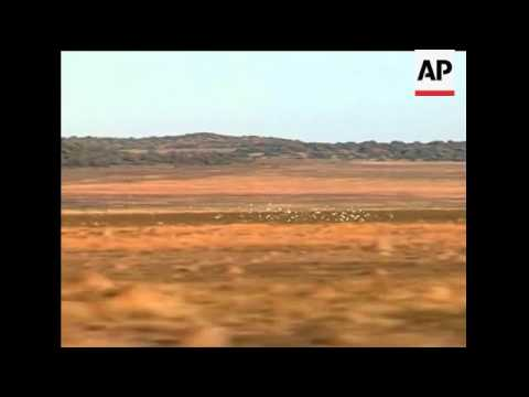 Racing pigeons take to the air in South Africa