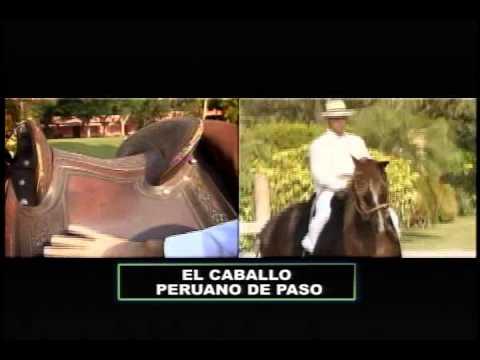 """Especial: """"El caballo peruano de paso"""""""