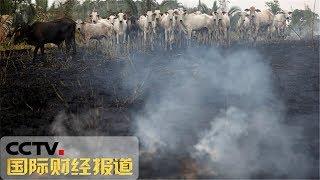 [国际财经报道]热点扫描 印度旁遮普邦一烟花厂爆炸 已致23人死亡| CCTV财经