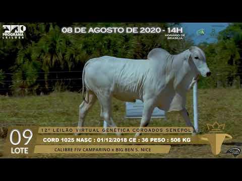 LOTE 09 CORD 1025