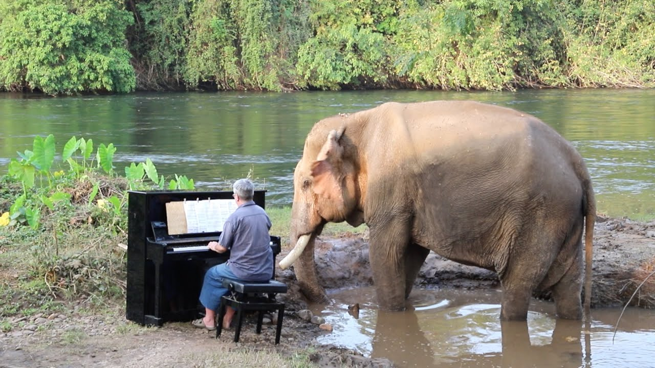 Piano For 2 Bull Elephants Behind The Scenes Faqs Youtube