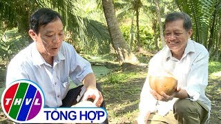 THVL | Nông nghiệp bền vững: Trồng dừa uống nước theo chuẩn xuất khẩu