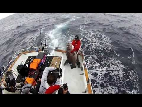 Jigging Big Kingfish with Kiwi Fishing New Zealand