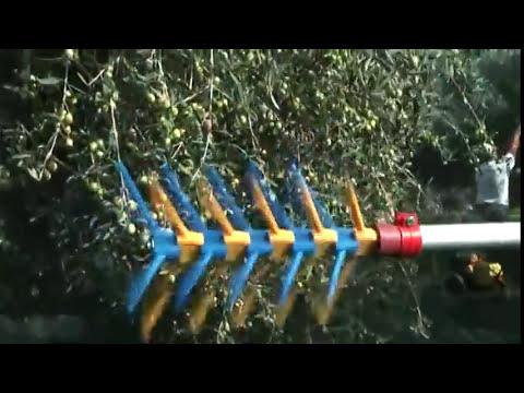 ΚΥΔΩΝΑΚΗΣ-ΡΑΒΔΙΣΤΙΚΗ ΒΕΡΓΑ ΠΑΛΙΝΔΡΟΜΙΚΗ - ΚΟΥΠΕΠΕ
