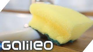 So spannend kann unser Küchenschwamm sein | Galileo | ProSieben
