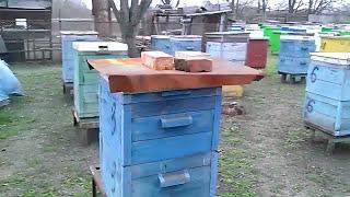 Практическое пчеловодство - своя пасека(Небольшое видео о собственной пасеке. Показан пример расположения ульев на пасеке, стойки под улья. Выклад..., 2016-04-03T20:23:20.000Z)