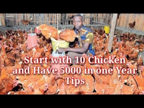 START WITH 5CHICKEN AND HAVE 5000 BIRDS IN 1 YEAR