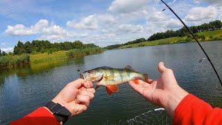 Пруд с окунями и щуками! Рыбалка с Кумом!