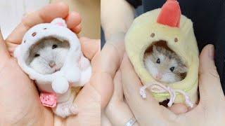 Настя и Папа НОВОЕ!Приколы с ХОМЯКАМИ (СМЕШНЫЕ ХОМЯКИ)Hamsters like #335 funny video about animals