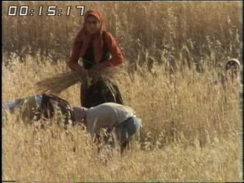 Israeli Settlers - Palestinians - West Bank - 1981