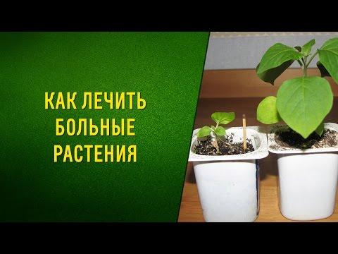 Как лечить больные растения без химии. Видео
