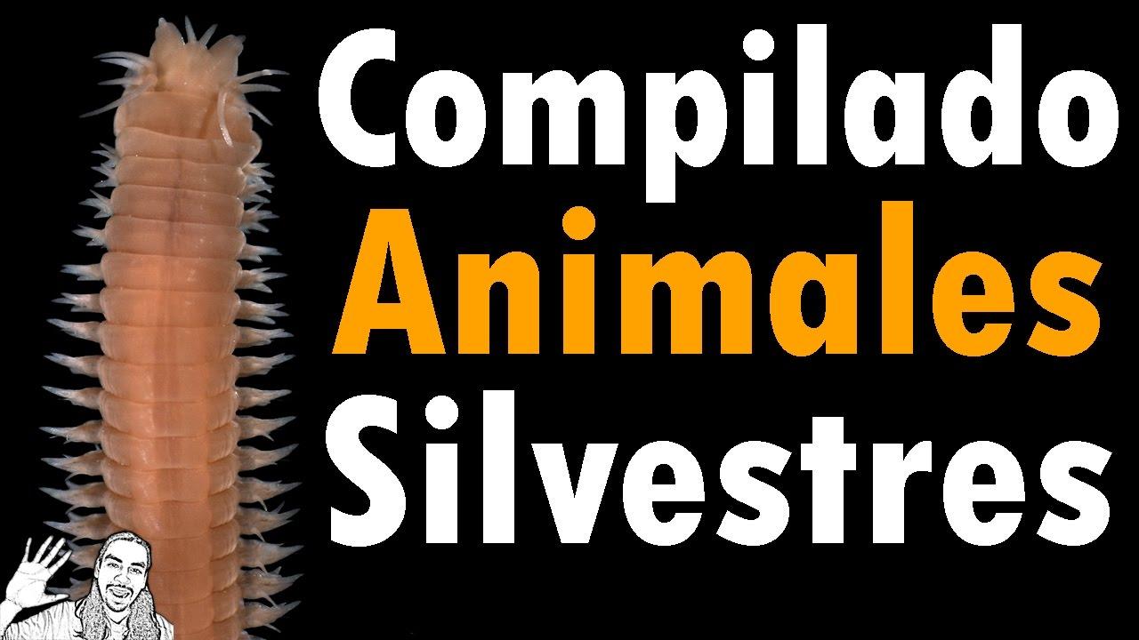 Compilado Animales Silvestres