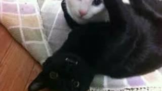История чёрных и белых котов