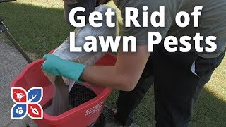 Do My Own Lawn Care - How to Get Rid of Pests in the Lawn