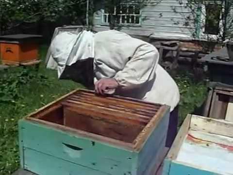 Расширение гнездиз YouTube · Длительность: 6 мин31 с  · Просмотры: более 5000 · отправлено: 30/06/2012 · кем отправлено: Рашит Ахметов
