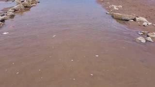 바닷 물빠진 작은도랑에 물고기 몰아서 잡기