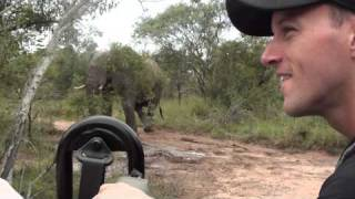 K&C Safari in Kruger Park- Elephant Charging the Jeep