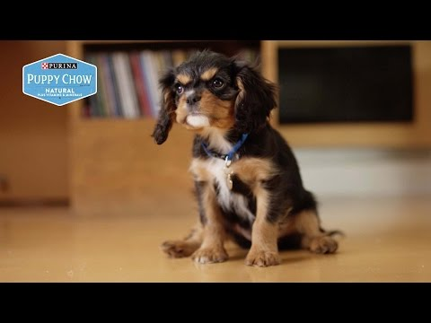 Puppyhood: Back To Work