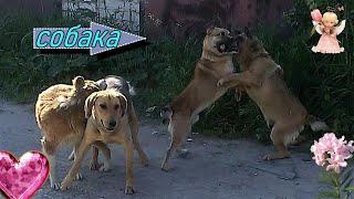Как собаки трахаются в стае