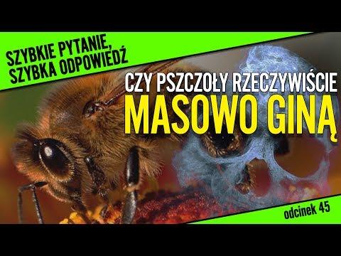 Czy pszczoły rzeczywiście masowo giną? | SPSO#45