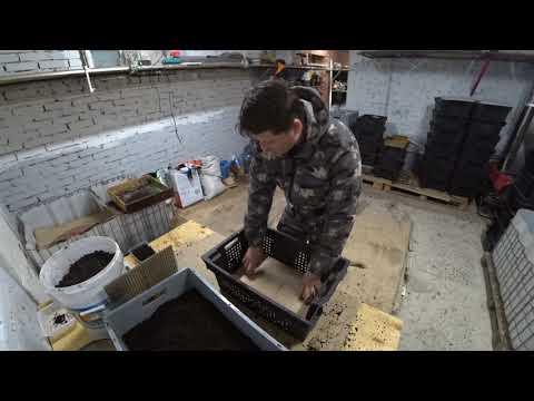 Вопрос: Сколько можно заработать на разведении червей для компоста?