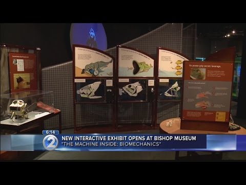 Bishop Museum exhibit offers 'nuts and bolts' look at natural world
