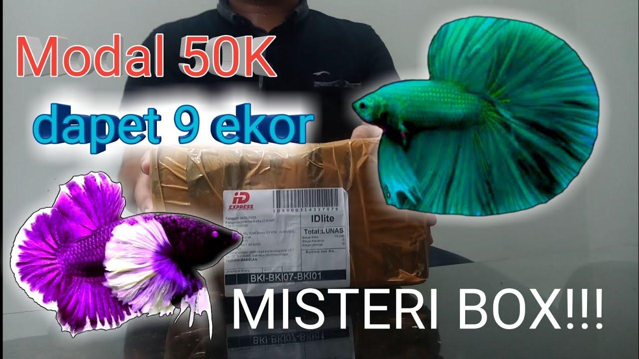 Unboxing Misteri Box Cupang!!!