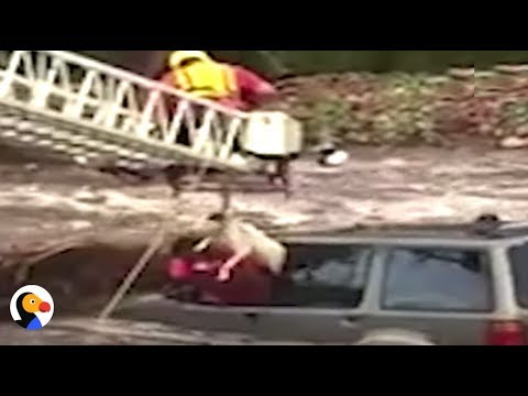 Owner Saves Dog FIRST During AMAZING Flash Flood Rescue | The Dodo