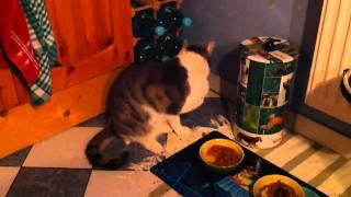 Meine Katze isst mit ihrer Pfote!!
