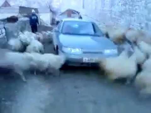 Sheep Cyclone(Original)