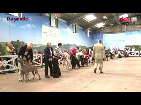 National Gundog 2016 - Best in Show - Highlights