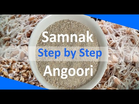 Samnak/ Angoori For Sohan Halwa | Sprouted Wheat | Angoori Powder By Easy Cooking With Shazia
