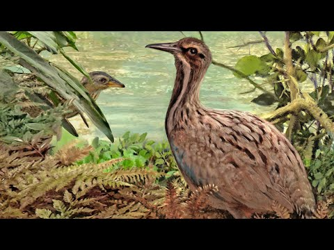 Fossil Shows Ostrich Relatives Lived in North America 50 Million Years Ago
