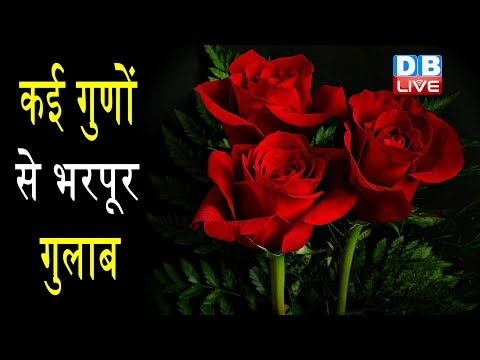 गुलाब के फूल के फायदे | Health Benefits of Rose Flower|Rose Petals: Benefits and Uses thumbnail