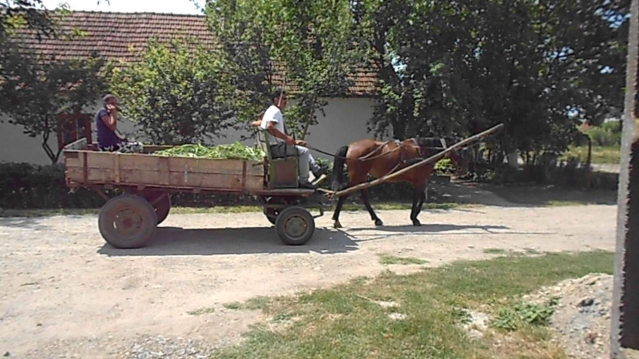 Leben In Rumänien