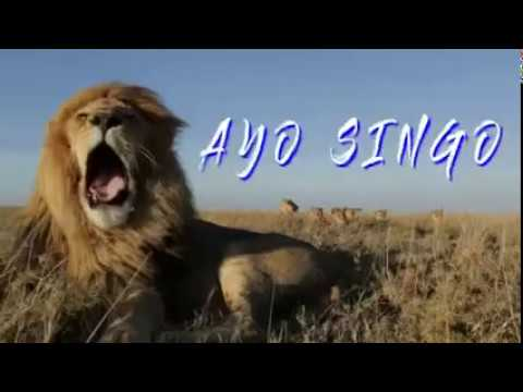 DESPACITO versi AREMA AYO SINGO Full Version