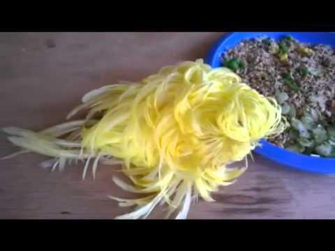 Feather Duster Worm Baby Periquito plumero / Fe...
