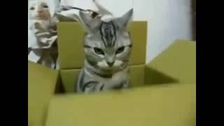 ПРИКОЛЫ С КОТАМИ  # Кот радист.