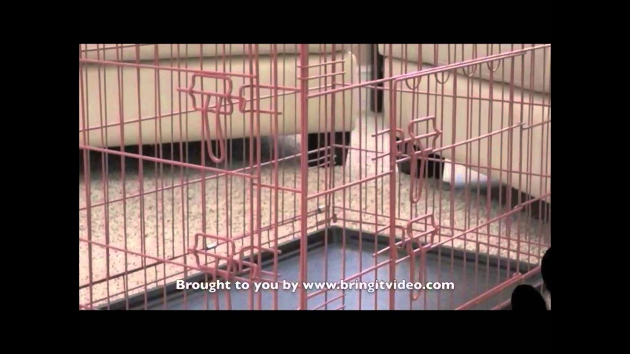 Folding Dog Crate  Collapsible Dog Crate