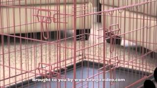 Folding Dog Crate - Collapsible Dog Crate
