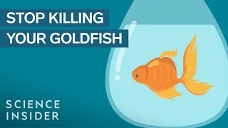 How To Keep Your Goldfish Alive For 15 Years