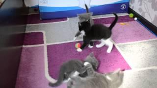 Стенка на стенку или пушистый беспредел(отдам котят в добрые руки 09.05.2015 Барнаул)