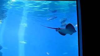 Mallorca Zoo Aquarium Manta