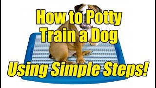 How to Potty Train a Dog Using Simple Steps!