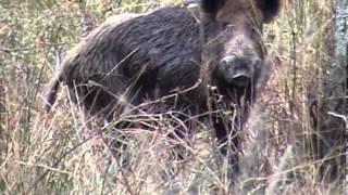 Łowy na grubego zwierza - film z audiodeskrypcją