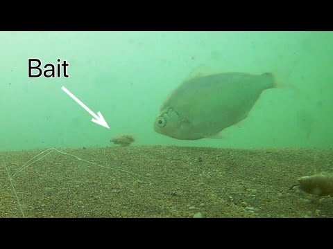UNDERWATER FOOTAGE | Surf Fishing
